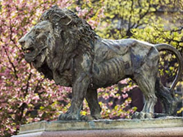 Wyatt lion