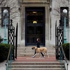 Walking a dog on campus