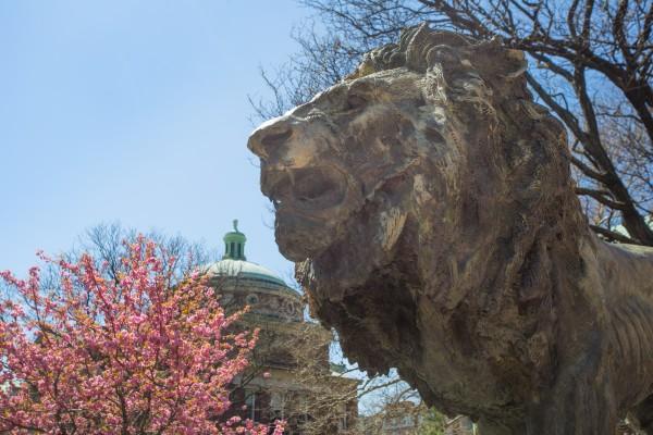 Lion during spring