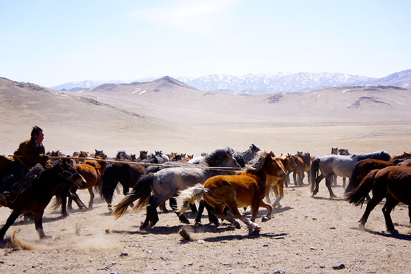 "A nomadic herder ""breaking,"" or taming, a horse. Photo: Kening Zhu CC  '14"