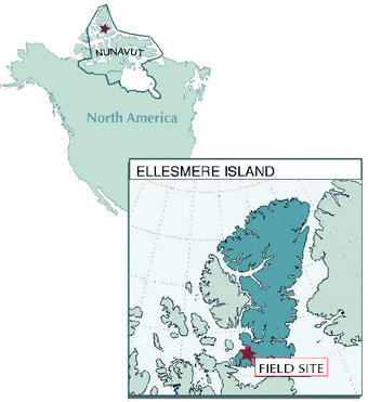 The fossil site where Tiktaalik roseae was discovered is in the northernmost part of the Canadian Arctic on Ellesmere Island in Nunavut territory. Graphic: Kalliopi Monoyios