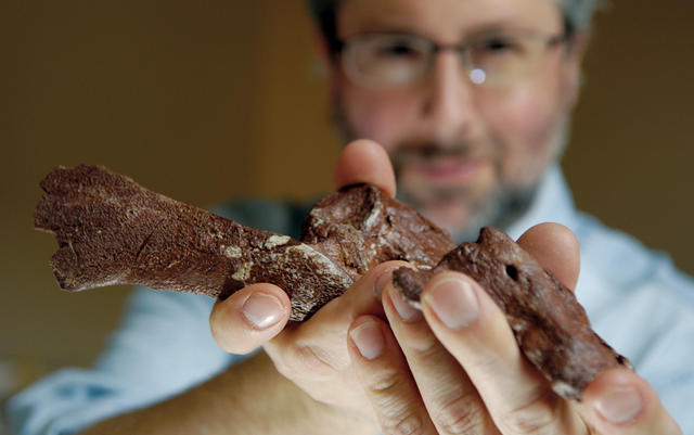 Shubin, associate dean for organismal and evolutionary biology and the Robert R. Bensley Professor at Chicago, holds part of a fossil from Tiktaalik roseae, a species that fills in the evolutionary gap between fish and land animals. Photo: Dan Dry