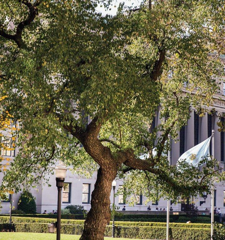 Spindle tree (Euonymus bungeanus)